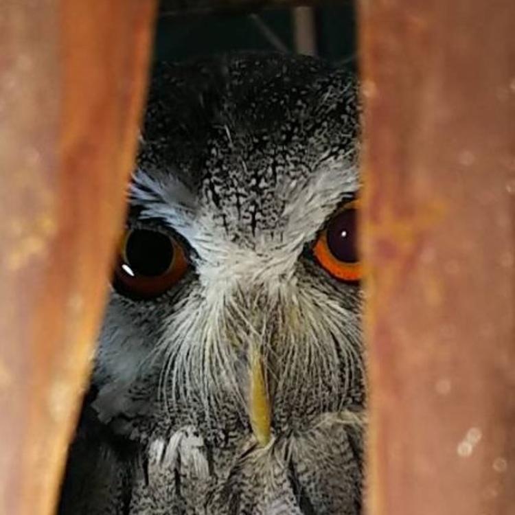 owl写真